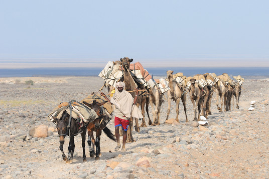 Salt caravan - Danakil Depression