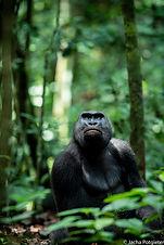 Central African Republic-675 copy.jpg