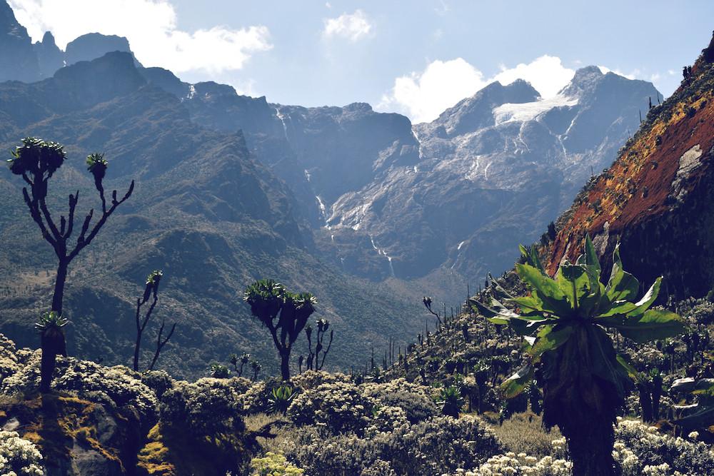 Rwenzoris - Mountains of the Moon