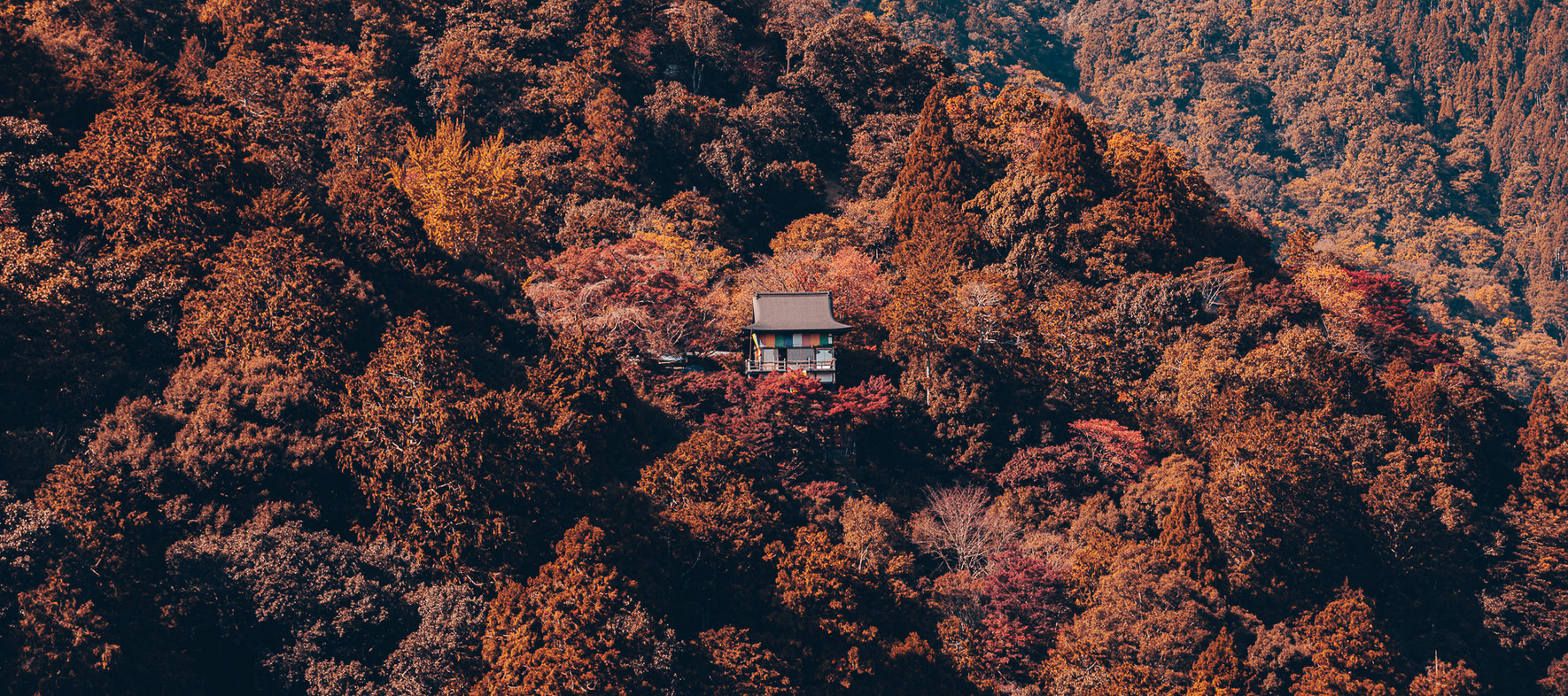 TKPA-Kyoto201911-0354-HDWH.jpg