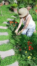 woman_gardening[1].jpg