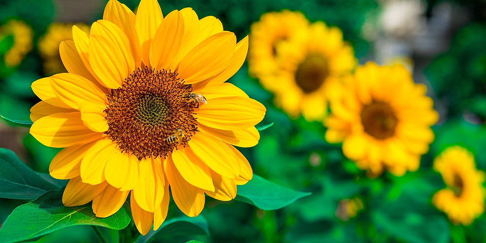Sunflower February Networking & Social Meet Up