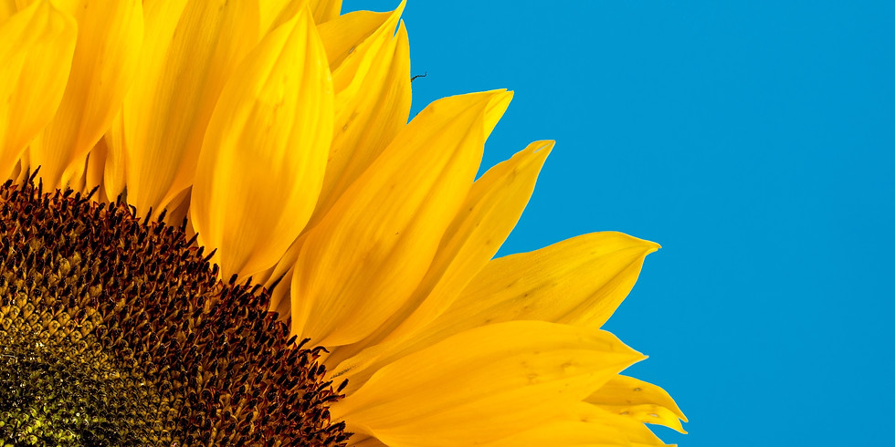 Sunflower Networking and Social Meet-up - LONDON