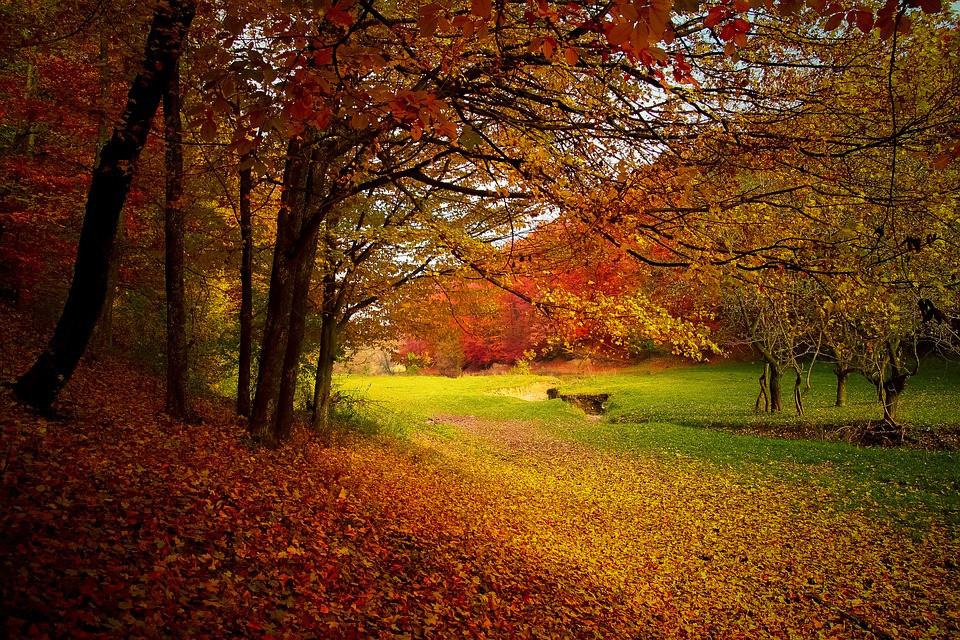 A Mindful Autumn Walk