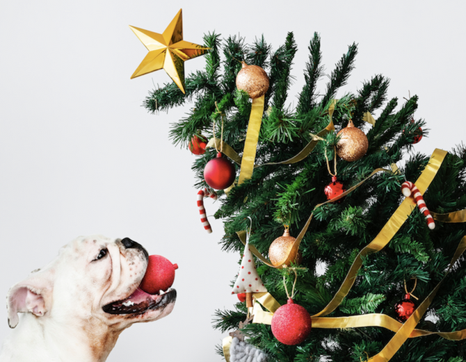 Twelve Days of Christmas - Some great tips for good mental health this festive season