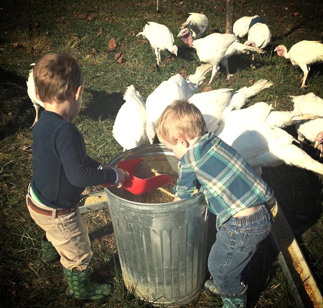 Boys feeding the turkeys