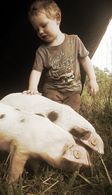 Rhett with pigs