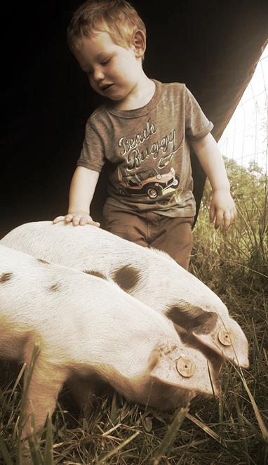 Rhett with pigs