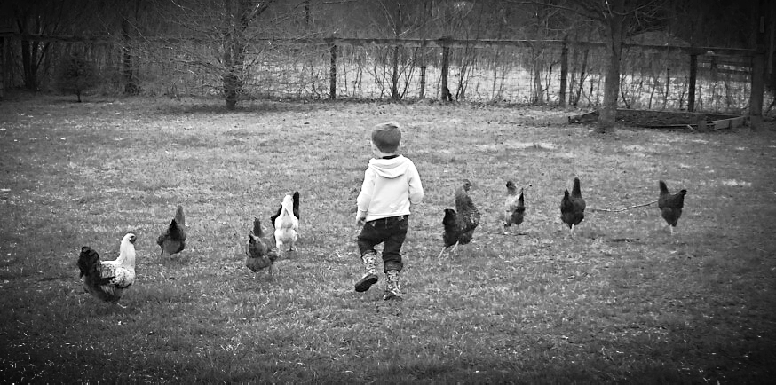 running with hens