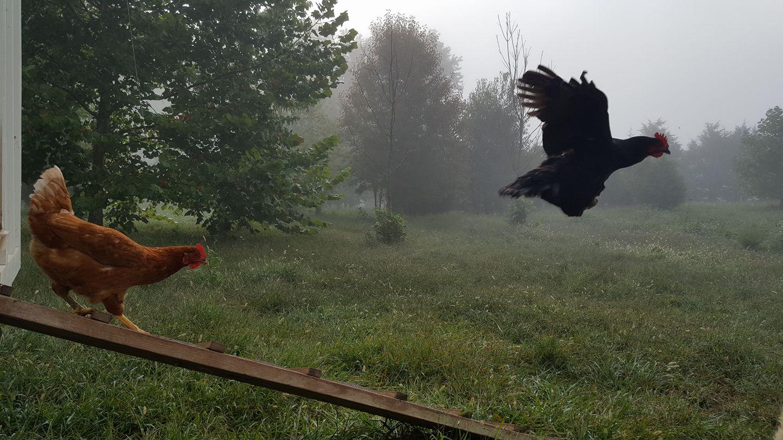 flyingchicken