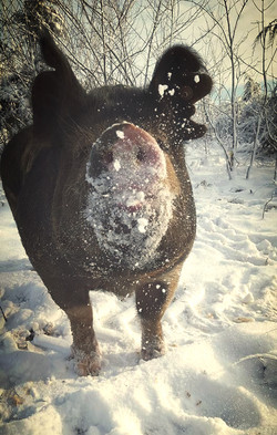 Petunia in the snow