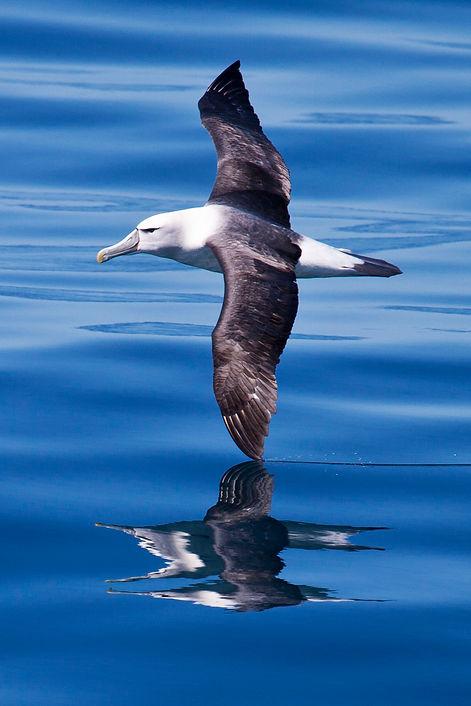 101215_BARBARA VEIGA_BIRDS_CROSSING FROM