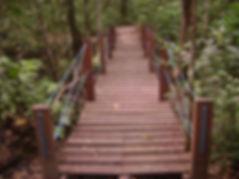 Trail in the Curado Atlantic Rain Forest Recife