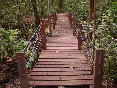 Trail in the Curado Atlantic Rain Forest Recife