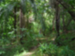 Curado Atlantic Rain forest Recife