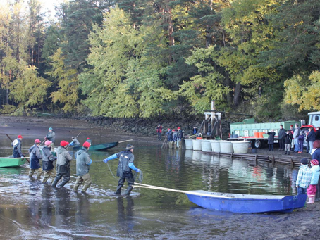 """ITKI Austria requests recognition of """"Waldviertel pond fishing"""" as an intangible cultural heritage"""