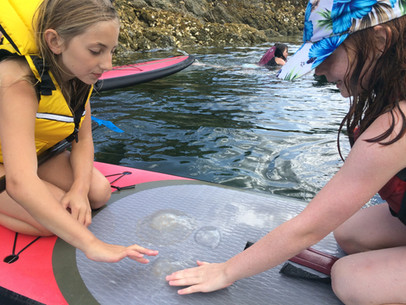 Identifying jellyfish.
