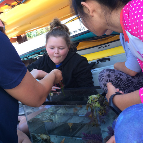Exciting creatures in the dockside touch tank.