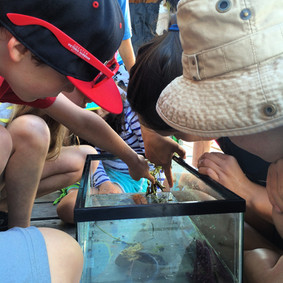 Touch tank on the dock.