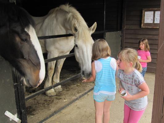 _wsb_531x398_Heavy+Horse+04.06.11+024