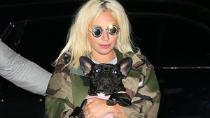 Lady Gaga's Two Bulldogs Stolen and Dog Walker Shot