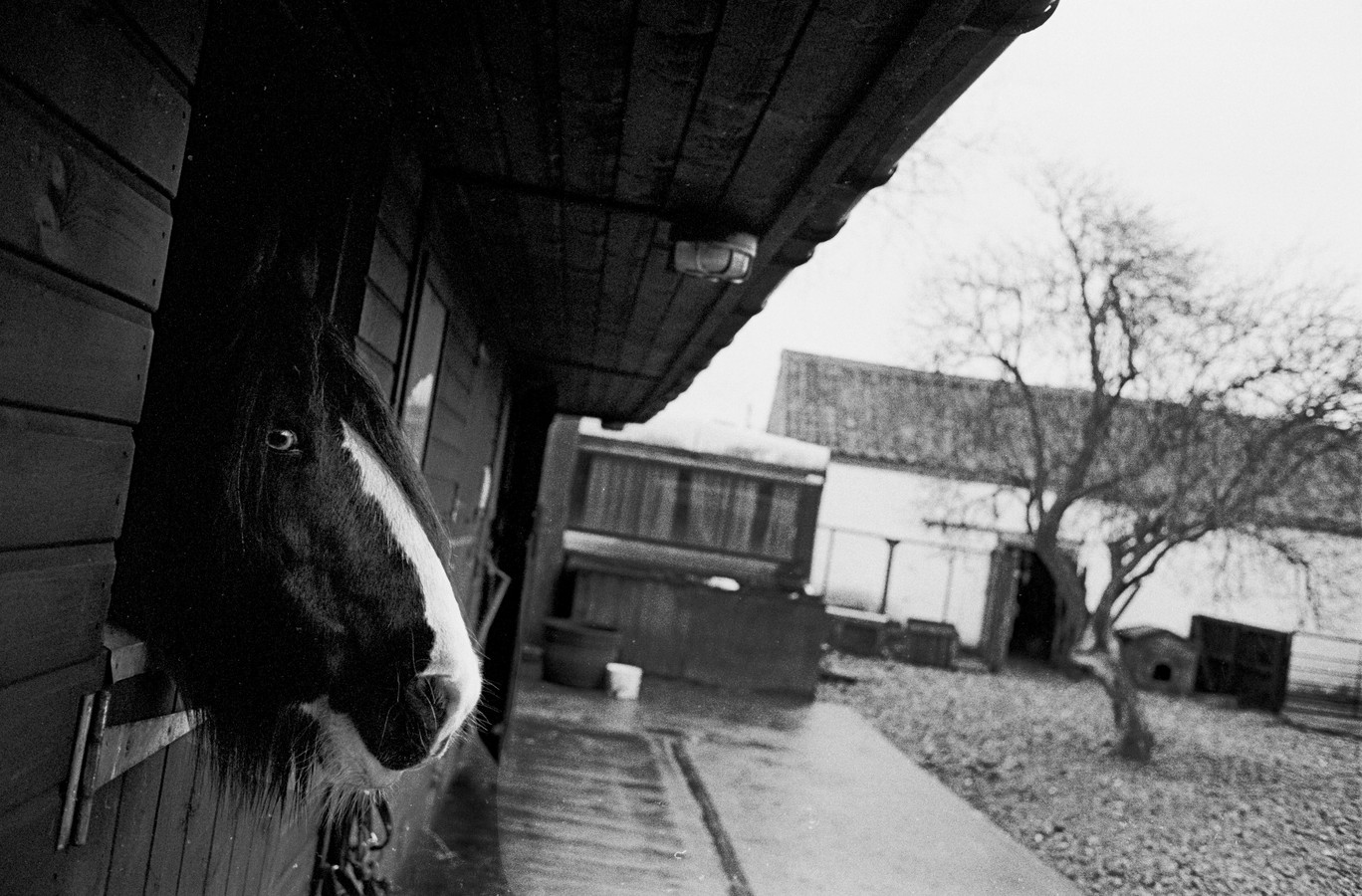 Waiting in the stable