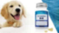 Canine Health, LifeVantage, Dog Health