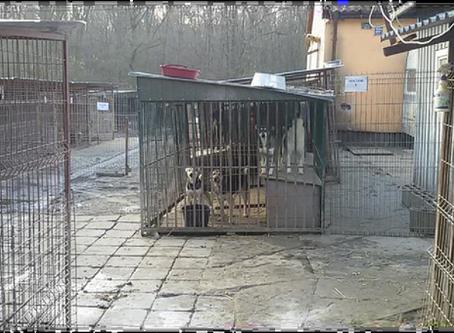 Der Tierschutzverein Neuss im Einsatz - Unterwegs nach Polen
