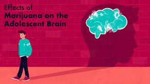 Effects of Marijuana on the Adolescent Brain