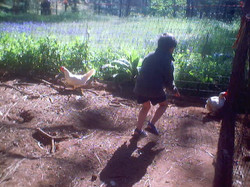 Logan chasing chickens