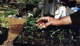 New Seedlings