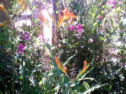 Spring Knoll Garden