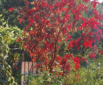 Brilliant fall color