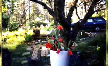 orchidcactus.JPG