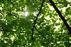shade-trees.jpg