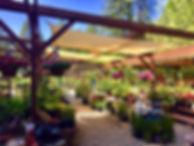 The Garden Center