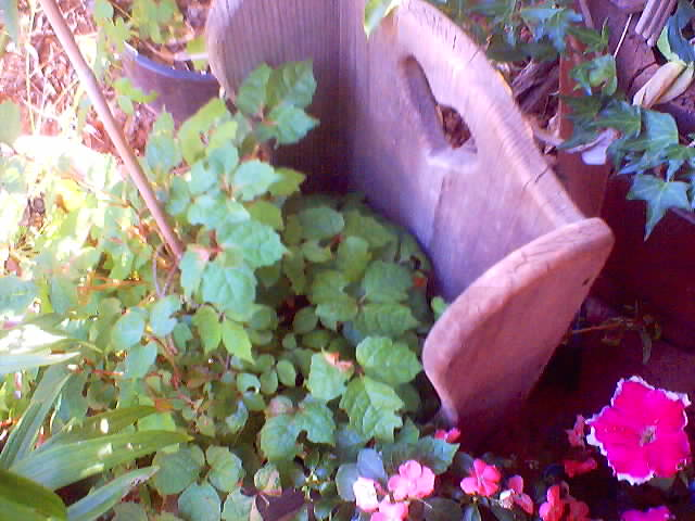 Garden joys, a wee chair