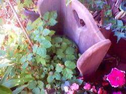 Garden joys, a wee chair