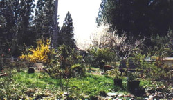Knoll Garden in early spring
