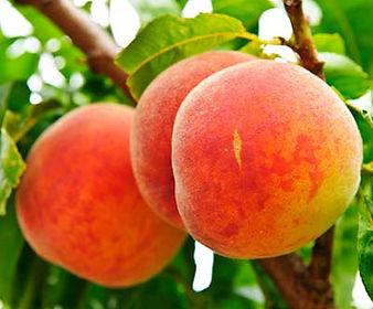 thumb-fruit-trees.jpg