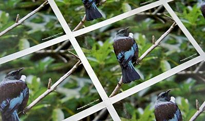 Photos mounted on card
