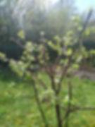 garden march1.jpg