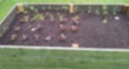 garden march4.jpg