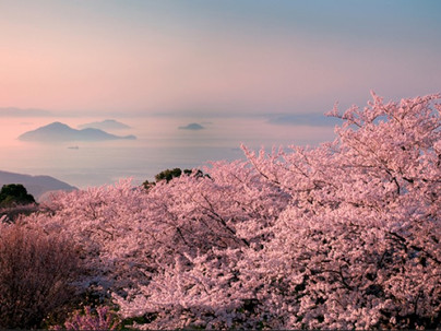 The Japanese Art of Acceptance: Shikata ga nai