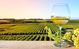 visite vignoble coteaux aubance