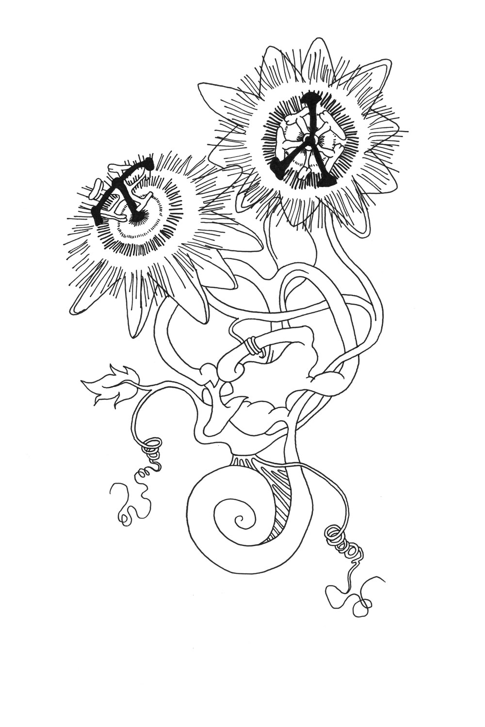 Inner Ear Coloring Page