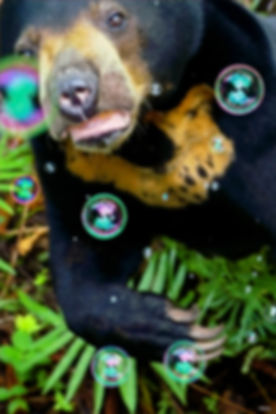 Borneo%202019-1-20_edited.jpg
