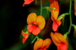 Wldflowers at Mt Frankland