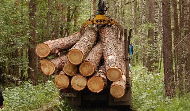 Надежные поставщики древесины