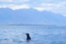 Sperm Whale, Kaikoura, New Zealand by Ed Drewitt